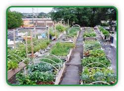rooftop vegetable gardening guide