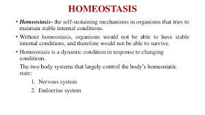 Human Anatomy And Body Systems Introduction To Human Anatomy And Physiology