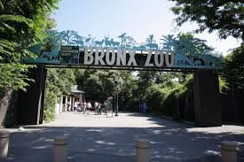 the bronx zoo is getting a 45 foot high zip line this summer