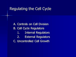 ap biology ch 12 the cell cycle ppt video online download