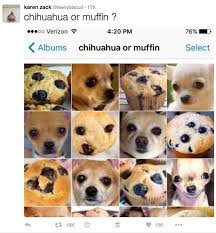 Puppy Memes - this puppy or bagel meme is the best thing to happen to the internet
