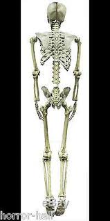life size barney skeleton human skull cheap halloween prop