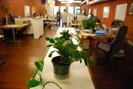 plantes bureau apportez des plantes au bureau pour être heureux au travail
