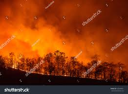 Orange Color by Forest Fire Wildfire Burning Tree Red Stock Photo 420040681