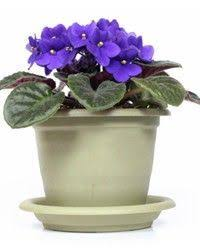 low light houseplants plants that don t require much light good list of house plants that don t need a lot of light which my