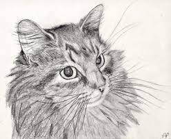 pencil sketches of cats drawing pencil