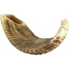 where to buy shofar shofar buy shofars at judaica mall