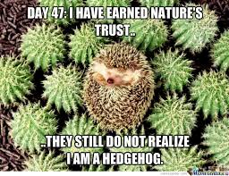 Hedgehog Meme - camouflaged hedgehog by pana90 meme center