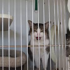 Talking Cat Meme - talking cat behind bars meme generator