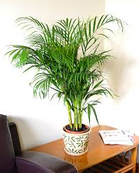 indoor plants related keywords suggestions indoor plants long tail