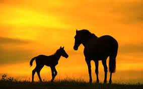 mustang horse silhouette horse silhouette sunset horses wallpapers horse silhouette