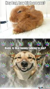 Stoner Dog Meme Generator - list of synonyms and antonyms of the word high dog meme