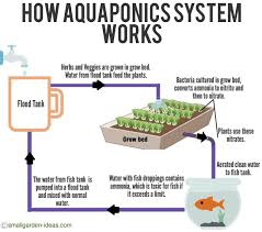 aquaponics systems for indoor gardening small garden ideas