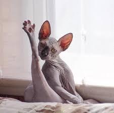 sexy cat meme generator imgflip