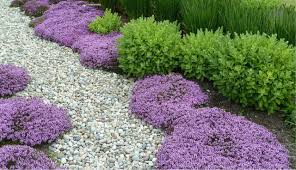 Weather Zones For Gardening - 18 best flowering ground cover plants balcony garden web
