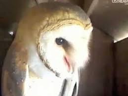 Owl Birthday Meme - happy birthday meme youtube