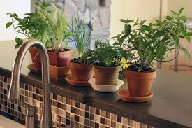 Window Sill Herb Garden by 13 Easy Herbs To Grow Indoors Hgtv