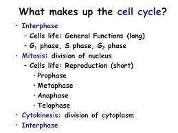 mitosis u0026 meiosis review be sure you study u2013notes u2013labs