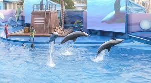 ocean park hong kong tickets klook