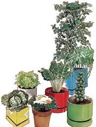 Indoor Garden Containers - a winter container garden organic gardening mother earth news