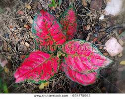 of the leafy plants stock images royalty free images