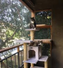 the catio is a patio for your cat because you win cats you win