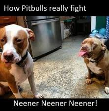Shocking Meme - 12 dangerously shocking facts about pit bulls