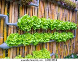 vegetable decorated wall vertical garden idea stock photo