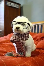 Hipster Meme Generator - hipster dog meme generator