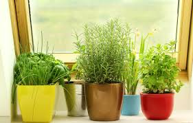 how to do indoor gardening in small spaces the home depot community