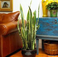 13 best best purifying plants images on pinterest indoor house