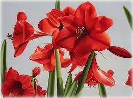 imagenes flores bellisimas bellas imagenes de flores para fondo de pantalla las mejores