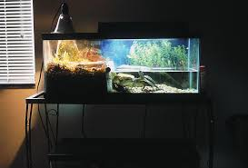 How To Make Fish Tank Decorations At Home Keeping The Water In Your Turtle Tank Clean
