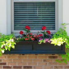 shelf good window ledge planter box with beatifull flower and