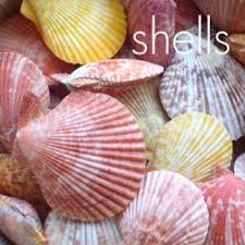 where to buy seashells 207 best sea shells by the sea shore images on sea