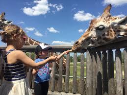 Six Flags Address Nj Six Flags Great Adventure Safari Off Road Jackson Nj 2016 Youtube