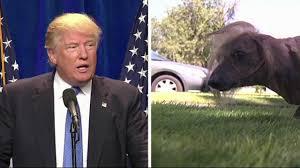 Ugliest Martha The Neopolitan Mastiff Crowned This Year U0027s Ugliest Dog At
