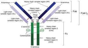 heavy chain light chain characterising therapeutic antibodies and adcs using mass spectrometry