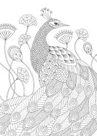 145 coloring peacock images coloring books