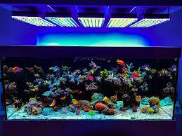 best led light for planted tank aquarium led lighting photos best reef aquarium led lighting gallery