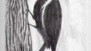animal pencil sketch drawing pencil