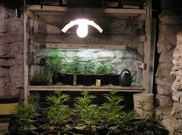 marijuana grow room setup growing organic marijuana growing