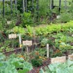 vegetable garden caujduv decorating clear
