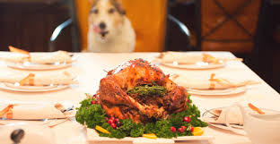 foods to avoid giving your pet this thanksgiving the barking lot