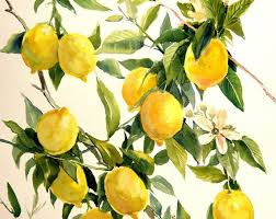 cuisiner le fruit de l arbre à cuisine citron oeuvre citrons sur arbre peinture originale d