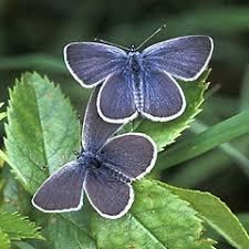 butterfly conservation warwickshire saving butterflies moths