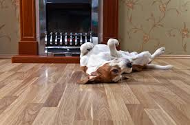 Best Flooring For Pets Why Hardwood Floors Are Best For Your Pets Procore Flooring