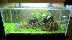 all pond solutions open top aquarium fish tank 6wks update