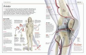 Human Body Muscles Images Bisl 12 Human Body 01