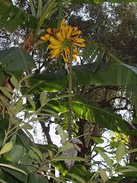 free images nature fruit leaf flower jungle italy botany